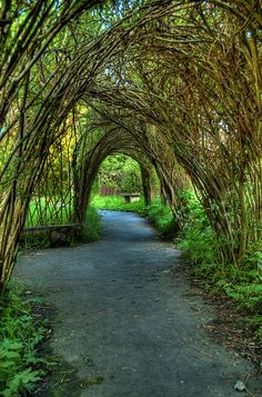Part of a series of walks around Wycoller, Lancashire Tree Tunnel, Garden Arches, English Countryside, Belleza Natural, Lake District, Places Around The World, Pathways, Beautiful Gardens, Outdoor Gardens