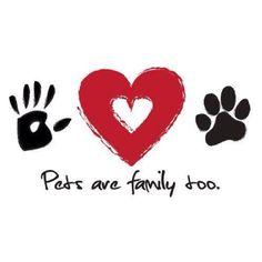 Pets ❤`❤`❤`❤`❤`❤`❤