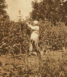 """Laura Ingalls Wilder in her garden- Mansfield, MO. Laura herself took great care in her garden throughout her life. The back of this photo speaks of """"Bessie"""" picking in her garden Old Pictures, Old Photos, Vintage Photos, Laura Ingalls Wilder, Pioneer Life, Pioneer House, Wilder Book, Ingalls Family, Family World"""