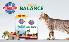 Hill's Science Diet Ideal Balance Cat and Dog Food Campaign