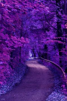 Purple Trees And Road