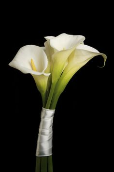 calla lilly bouquet. want to have a sash around each one, with white for me, and whatever color the bridesmaids end up wearing :)