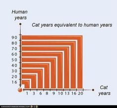 Cat years eqivalent to human years