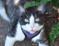 My cat Bill. Robin, Christi, Texas. 10/01/14.