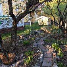 Suosikkivuodenaika omalla pihalla n-y-t #kevät #toukokuu #spring #omenapuu #kuunlilja #nuppu #kukka #piha #puutarha #igersoftheday #rsa_ladies #nature  #outdoor #life #futuremarja  #järvenpää #mikääneioleniintärkeääkuinpuutarhanhoito #appletree