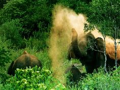 #Kerala #Tour #Packages