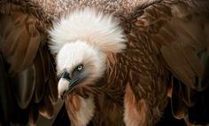 vulture-looking...