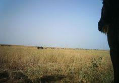 lion? watching zebra and wildebeast? I just classified this image on Snapshot Serengeti!