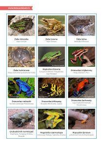 Światowy Dzień Rzek – pakiet edukacyjny Frogs, Montessori, Gardening, Animals, Animales, Animaux, Lawn And Garden, Animal, Animais