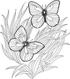 coloring pages for adults yahoo image search results - Prickly Pear Cactus Coloring Page
