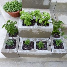 Urban Herb Garden on the Cheap Concrete cinder blocks are $1.09 a block; the herbs were $1.50 a piece at the Eastern Market. A complete herb garden for $21.00! And, it is even dog approved. It is finally summer in Michigan, despite last weekend's bizarre hailing and random snow shower. Paul and I took a trip down the Detroit's Eastern Market to buy flowers for the pots and get the herbs for my herb garden.