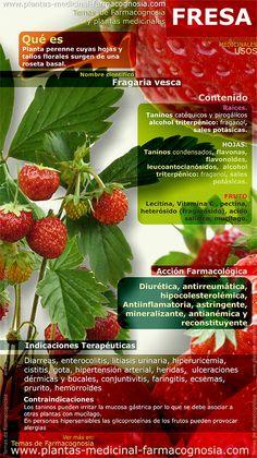 Infografía. Resumen de las características generales de la planta de Fresa. Propiedades, beneficios y usos medicinales más comunes de la Fresa (Fragaria vesca)
