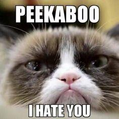 Ideas Memes Funny Cat Grumpy Kitty For 2019 Funny Grumpy Cat Memes, Cute Cat Memes, Funny Cats, Funny Animals, Cute Animals, Funny Memes, Hilarious, Grumpy Kitty, Grump Cat