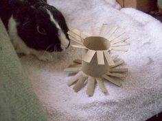 Make Your Own Rabbit Toys my boys loveeeeeeeeee this toilet paper roll i sometimes stuff it with timothy hay and carrots they love this little treat :)