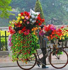 a beautiful traveling garden!