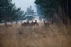 Red Deer in the forrest - a nice meeting with some deer