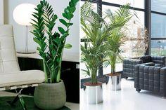 Aposte nas Plantas para Inovar o Visual da Sala | Flores - Cultura Mix