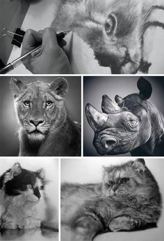 Various graphite drawings by Paul Lung, showing outstanding technique and talent..