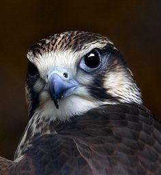 Hawk photo. In such perfect focus, would like to know how the photographer got this shot.
