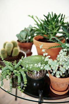 Via vtwonen. Lovely cluster of plant life. / sfgirlbybay