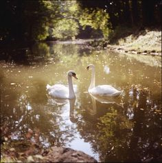 Swan Lake    Fairy Tales by Nature