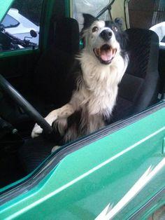 Driver Coco
