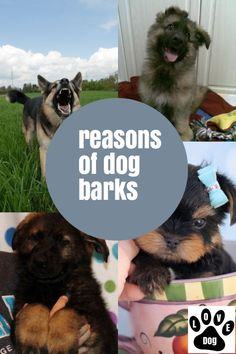 Dog Barking Made Easy With This Article #dogbarking Stop Dog Barking, Your Dog, Easy, Dogs, Animals, Animales, Animaux, Doggies, Animais