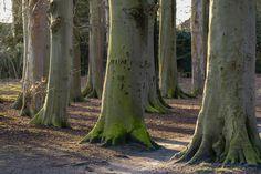 Foto 62 Hilverbeek, 's-Graveland, Wijdemeren, natuurmonumenten