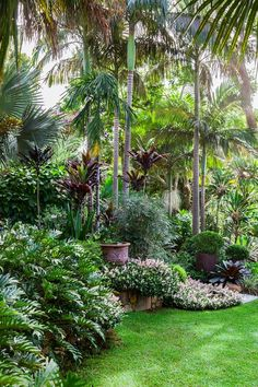 Alexander palms and cordylines reach toward the canopy. Below, *Trachelospermum jasminoides* 'Tricolor', one of the hardiest groundcover plants, spills from its raised bed.: [object Object]