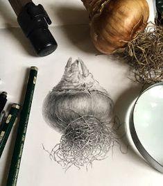 Plants Drawing Botanical Illustration Libraries 65 Ideas For 2019 Botanical Drawings, Botanical Illustration, Botanical Prints, Illustration Art, Illustrations, Plant Drawing, Painting & Drawing, Gouache Painting, Graphite Drawings