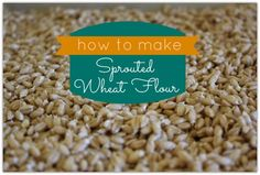 Weed 'em and Reap: How to make Sprouted Wheat Flour