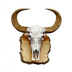Bull cráneo con cuernos aislados sobre fondo blanco Foto de archivo