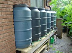 Backyard rain barrels, with gutter and hose attachments.