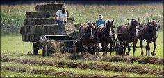 Amish   42157006_amish416ap[1]
