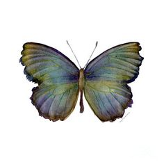 Painting - 65 Moonglow Butterfly by Amy Kirkpatrick