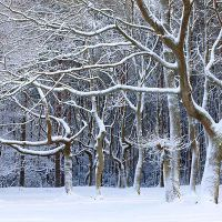 Gallery 1 Winter Trees, Landscape Photography, Dan, Gallery, Outdoor, Outdoors, Roof Rack, Scenery Photography, The Great Outdoors