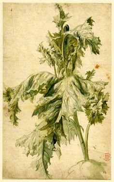 Study of foliage, formerly in an album  Watercolour, partly strengthened with gum;  Jan van Huysum