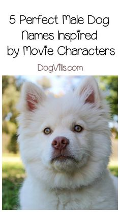 Looking for cool male dog names for your newly adopted pup? Check out our favorites inspired by movie characters! Japanese Dog Grooming, Japanese Dogs, Big Dog Toys, Asian Dogs, Puppy Names, Pet Names, Military Dogs, Best Dog Training, Best Dog Food