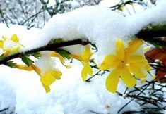 Arbusti cu un colorit spectaculos pentru gradina de iarna