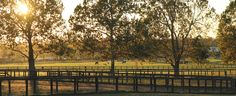 Milestone Farm,  Lexington, KY Horse Farms, Thoroughbred, Horse Racing, Vineyard, Beautiful Places, Horses, World, Outdoor, Outdoors