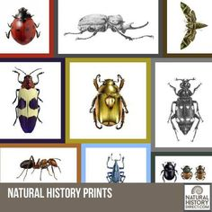 Posters - Shop the collection, website updated daily, click here now www.NaturalHistoryDirect.com