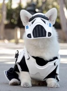 Winston the white corgi totally nailed it this Halloween — by combining the Dark Side with the forces of cuteness