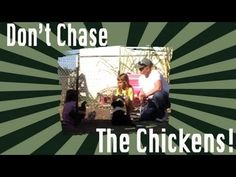 Puppies chasing chickens: Dog Training - http://www.doggietalent.com/posts/puppies-chasing-chickens-dog-training/