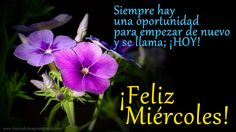 #FelizDIa   #FelizMiercoles  Flores Con Mensaje De Feliz Miercoles