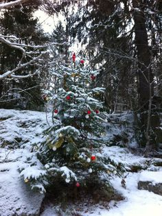 Christmas tree in the forest. By Malin & Charlie Sköld