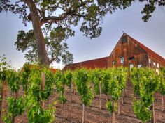 This multi-faceted Central Coast operation now produces the ever-popular Liberty School wines (for w... - Photo by Hope Family Wines