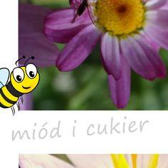 👉Czy znacie i lubicie internetowe challenge?😲 Kojarzycie akcje, jak Movember czy ALS Ice Bucket Challenge, które angażowały miliony i budowały świadomość problemów zdrowotnych czy społecznych? Teraz mamy dla Was propozycję zaangażowania się w pomoc ginącym pszczołom.🐝 W skrócie chodzi o to, aby w swoim ogrodzie, na tarasie lub balkonie zasadzić roślinę przyjazną pszczołom, zrobić zdjęcie albo film i opublikować go w swoich mediach społecznościowych z hashtagami #bee #friendly #plant.. Film, Movie, Film Stock, Cinema, Films