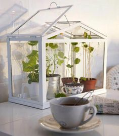 25 Small Urban Garden Design Ideas: For those of you who live in smaller spaces, but still want to indulge your green thumb, below are some great ideas for urban gardening. Outdoor Greenhouse, Small Greenhouse, Greenhouse Plans, Outdoor Plants, Indoor Outdoor, Greenhouse Gardening, Winter Greenhouse, Flower Gardening, Pallet Greenhouse