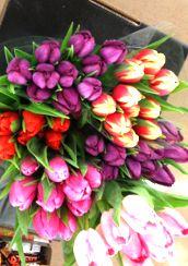 Spring tulips:)