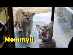 Funniest Animals 2020 Compilation - Awesome Funny🐶 Dogs and 😻 Cats - YouTube Cute Funny Animals, Funniest Animals, Funny Dogs, Life Hacks For School, Panther, Baby Animals, Laughter, Dog Cat, Animation